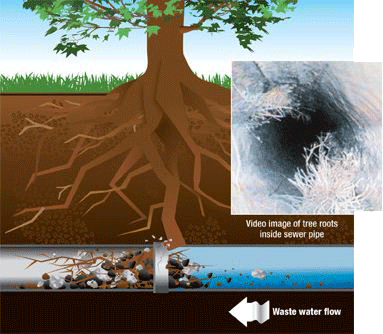 Clogged-Drains-Caused-By-Tree-Roots